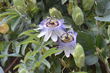 Artistic shot of flowers